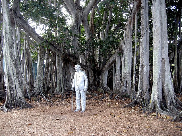Banyan tree of Thomas Edison